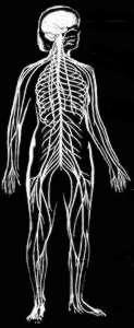 Inside Out skeleton